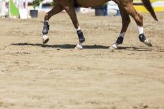 关闭马在乘坐围绕ob的竞争比赛期间 免版税库存照片