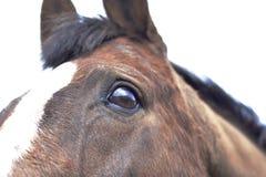 关闭马的眼睛和头 免版税库存照片