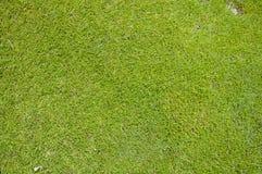 关闭高尔夫球绿色 库存图片