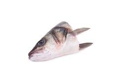 关闭鱼的头 免版税库存照片