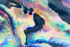 关闭鲍鱼壳,鲍属软体动物五颜六色的背景  库存图片