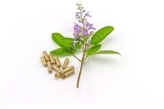 关闭鲜花Vitex与绿色叶子的trifolia Linn或印地安人Privet 免版税库存图片