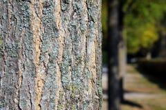 关闭麝香盖的树干吠声在秋天 免版税库存图片