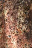 关闭-一棵热带树的美丽的织地不很细吠声 库存图片