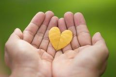 关闭-两只手拿着一片黄色心形的叶子 免版税库存图片