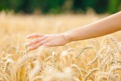 关闭移交黑麦的领域 免版税库存照片