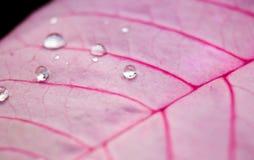 关闭水滴在叶子的 库存照片