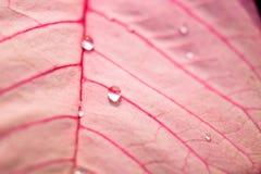 关闭水滴在叶子的 免版税图库摄影