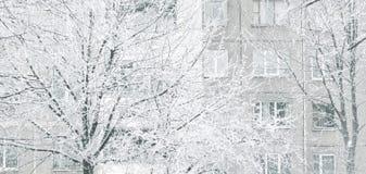 关闭 城市冬天风景 树冰树 免版税库存图片