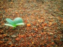 关闭年幼植物发芽 库存图片