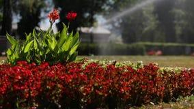 关闭水浇灌喷水隆头的浪花,花园背景 股票录像