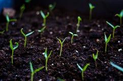 关闭年轻生长与在绿色和早晨阳光环境的雨水下落的种子萌芽和植物 库存照片