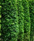 关闭绿色灌木的边 免版税库存图片
