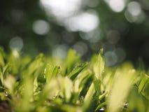 关闭绿草有模糊的背景 免版税图库摄影