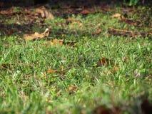 关闭绿草领域和秋叶 免版税库存照片