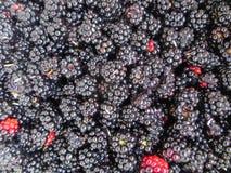 关闭黑莓背景的图象 黑鹂 免版税库存照片