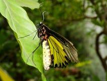 关闭蝴蝶15 免版税图库摄影