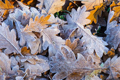 关闭结霜的秋叶 库存照片