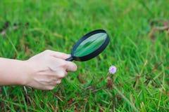 关闭human手探索的自然在与扩大化的花 库存图片