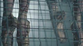 关闭pointe shoeses的年轻芭蕾舞女演员是在金属棒后的腿 芭蕾实践 美丽亭亭玉立优美 股票视频