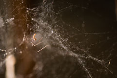 关闭spiderweb射击  库存照片