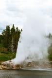其中一个最美丽如画和最可预测的喷泉在黄石国家公园 库存图片