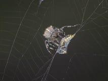 其蜘蛛网 免版税库存照片