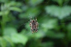 其蜘蛛网 免版税图库摄影