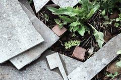 具体元素特写镜头背景的植物  免版税库存照片