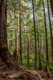 具体化树丛 库存照片