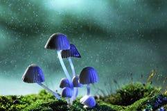 具体化闪亮指示蘑菇 库存图片