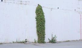 具体和绿草墙壁  图库摄影