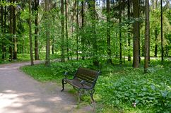 具球果东欧森林路径乌克兰木头 在公园换下场 库存图片