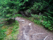 具球果东欧森林路径乌克兰木头 库存照片