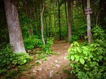 具球果东欧森林路径乌克兰木头 免版税库存图片