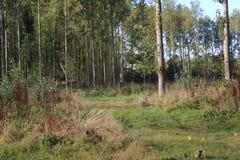 具球果东欧森林路径乌克兰木头 图库摄影