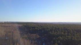 具球果森林在镇背景的秋天  ?? 森林风景顶视图与镇的在天际的距离的 股票视频