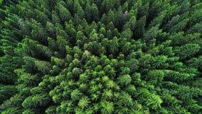 具球果森林 免版税图库摄影