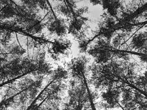具球果森林 库存图片
