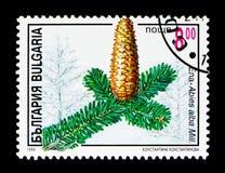 具球果植物,植物群serie,大约1996年 库存图片