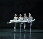 经典四一点天鹅舞蹈这天鹅湖边芭蕾天鹅湖 免版税库存照片