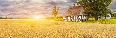 典型的丹麦美丽如画的老房子和wheatfield在日出 免版税库存照片