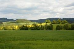 典型的农村漂泊森林风景,捷克,欧洲 库存照片