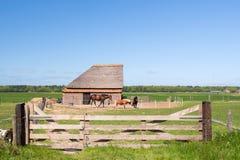 典型的动物谷仓在荷兰 免版税图库摄影