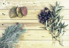 典型的地中海植物 免版税库存照片