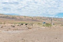 典型的干旱的南部非洲的干旱台地高原农厂场面 免版税库存图片
