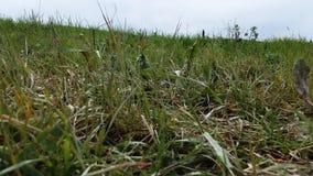 典型的托斯卡纳绿草小山 空中寄生虫录影射击 股票视频
