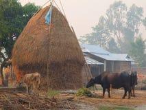 典型的村庄,尼泊尔的平原 库存图片