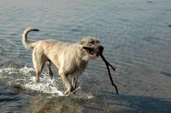 典型的狗 库存照片