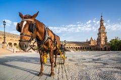典型的用马拉的支架在Plaza de西班牙 免版税库存图片